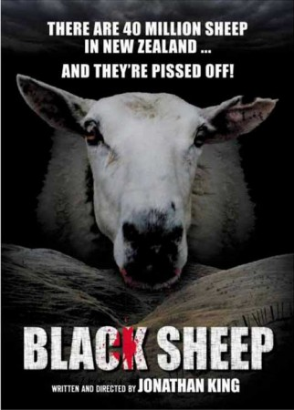 medium_black_sheep.jpg